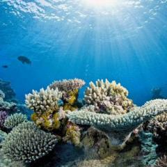 underwater photo of reef and fish